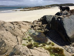 Rockpool (zanypurr) Tags: sea beach rocks pool seaweed sand connemara odc compoundwords explore