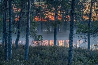 Kauhaneva - Kauhaneva National Park in western part of Finland