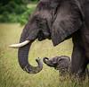 Gooood Morning! (ラルフ - Ralf RKLFoto) Tags: kenia kenya masaimara narok natur safari tiere animals wildlife elephant baby elefant