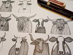 just cattle WIP (Scrummy Things) Tags: sharonturner scrummy illustration illustrative pattern art design ink cattle cows bull farming farm dairy friesian animal wild hair horns workinprogress wip pen paper drawing