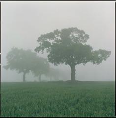 the morning of the 26th May (steve-jack) Tags: hasselblad 501cm 80mm cb fuji reala 100 film 6x6 120 hertfordshire mist fog morning tetenal c41 kit epson v500
