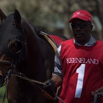 Groom with thoroughbred in paddock just before race. thumbnail
