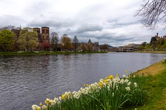 River Ness, Inverness, Holiness, Prettiness (armct) Tags: 28300mm d810 nikon afternoon bb spring flowers daffodils riverside landscape bridge church cathedral standrews riverbank river unitedkingdom uk scotland inverness riverness