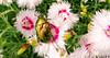 MACRO (M Malinov) Tags: macro colorful flowers spring insect beetle насекомо пролет