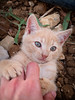 4059 - Giulio (Diego Rosato) Tags: giulio gatto cat kitten gattino pet animal animale fuji x30 rawtherapee gioco game playing