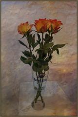 Rosen im Bierglas (Tatjana_2010) Tags: rosen texture bierglas blumen