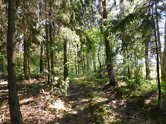 Walking up the hill (elisabeth.mcghee) Tags: wald forest trees bäume