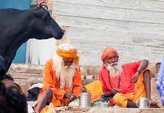 Voie sacrée..Sacred Way....India (geolis06) Tags: geolis06 asia asie inde india uttarpradesh varanasi benares gange ganga ghat inde2017 olympus hindu hindou religieux religious sage sadhu banaras