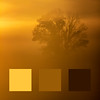 Colours of the Fogged Sunrise (aT0Mx) Tags: orange brown tree sunrise fog foggy color colour simple minimal landscape minimalism light dark intense ontario trenton canada yellow canon canonlens nature naturephotography