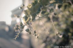 2017 09 08 - 172027 0 GR (ONLINED1782A) Tags: street streetshot plants green vsco vscofilme sunset