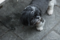 Teddy 05 (Jake.Ten) Tags: dog doggo thought think black white deep outdoor concrete