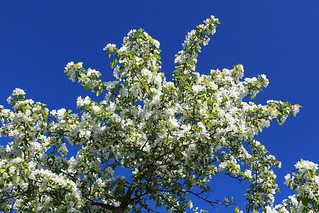 White apple and blue sky