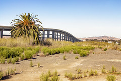 View of Bridge from Mare Island (SteveFrazierPhotography.com) Tags: searspointroad highway37 mareisland strait bridge mountins hills ca california scene scenic scenery landscape grass weeds sanfranciscobay bayarea solanocounty northercalifornia norcal beautiful palmtree roadway submarinebase navalshipyard stevefrazierphotography photographer abandoned closed