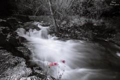 Waterfalls and poppies (Peideluo) Tags: blackandwhite detalles nature waterfall waterscape tree water poppies long exposure agua