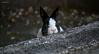 1 IMG_9149 b P (Ph Leonardo S.C.) Tags: coniglio bunny