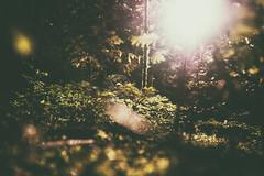 (a└3 X) Tags: natur nature alexander olympus sonne licht wald österreich neustift landscape outdoors color tree bäume wildlife alexfenzl a└3x