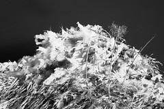 Frozen Sea Grass (Eric Gross) Tags: winter ct nature