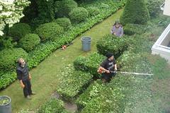 Gardeners trimming shrubs (D70) Tags: gardeners trimming shrubs sony dscrx100m5 ƒ35 216mm 180 125 burnaby britishcolumbia canada supervisor 2 workmen dogwood white flower garbage can lawn garden