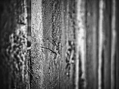 (GLKPhotos) Tags: wood fence grain knot sawmarks lines linear perspective depthoffield details structure tones tonalcontrast contrast blurred bokeh blackandwhite monochrome mono bw panasonic lumix gx8 primelens f17 micro4thirds mft shallow gap shaded edges planks textures shadows rough uncropped uniform