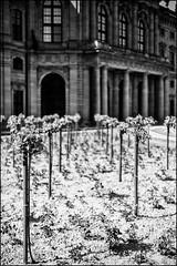 roses will bloom there ... (Armin Fuchs) Tags: arminfuchs würzburg residenz hofgarten residenzgarten roses house niftyfifty spring