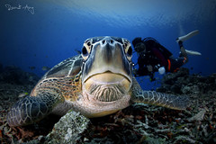 W H A D D U P (Randi Ang) Tags: gili meno gilimeno lombok indonesia underwater scuba diving dive photography wide angle randi ang canon eos 6d fisheye 15mm randiang turtle sea green seaturtle