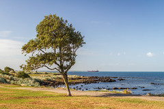 Looking towards St Kilda from Esplanade, Williamstown, Melbourne, Victoria (golferdave2010) Tags: 2018 autumn victoria landscape melbourne 7d australia seascape canon may trees