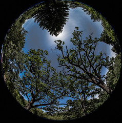 Excuse me while I kiss the sky… (thomas_delora) Tags: fisheye california sky napa napavalley domainechandon ted yountville