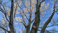 (mahler9) Tags: jaym february 2018 sunlight snow winter lgg4 explore