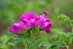 Touch of nature #3 (Nikolaos Gavrilakis) Tags: gavrilakis nikon d750 tamron 70300 diomidios garden flower λουλούδι κήποσ διομήδιοσ νίκοσγαβριλάκησ