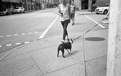 stubborn (Yutaka Seki) Tags: cachorro perro chien mansbestfriend dogwalking stubborn streetphotography vancouverbc olympusxa2 ilfordhp5plus400 blackandwhite bw homedeveloped blazinal rodinal firstroll audi bmw austin mini sidewalk bostonterrier