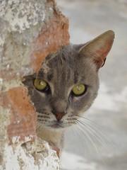Naxos (gerben more) Tags: cat naxos greece animal pet portrait