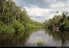 Tanjung Puting NP, Borneo, Indonesia (JH_1982) Tags: rainforest urwald regenwald jungle landscape scenery scenic boat boats water river forest nature ecosystem natur fluss boot tanjung puting national park np pn parc nacional nationalpark taman nasional танджунгпутинг kalimantan borneo pulau 婆罗洲 ボルネオ島 보르네오섬 калимантан indonesia indonesien indonésie 印度尼西亚 インドネシア 인도네시아 индонезия