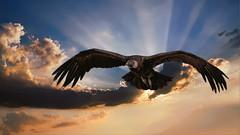 Andenkondor (Saarblitz) Tags: greifvogel andenkondor sonne strahlen licht potzberg vogel wolken natur