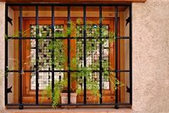 Colourful Window (Jocelyn777) Tags: windows mosaic plants grille houses buildings architecturaldetails architecture decoration docor daroca spain travel