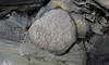 Pyrite concretion (Chattanooga Shale, Upper Devonian; Burkesville West Rt. 90 roadcut, Kentucky, USA) 3 (James St. John) Tags: chattanooga shale devonian burkesville kentucky pyrite iron sulfide concretion concretions nodule nodules