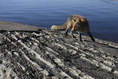 By the sea (Päivi ♪♫) Tags: norway oslo fox island sea