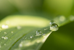 On The Edge (Kevin Tataryn) Tags: nikon d500 tokina 100mm leaf grass blade water droplet bead