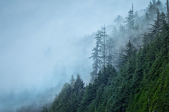 Pines in the winter fog (L.L..) Tags: oregon landscape canon canon70200f28isii