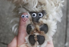 22/52 ... My dog and me 😄 (Chickpeasrule) Tags: googly eyes paw fur finger face funny dog me macro evie goldendoodle 52weeksfordogs