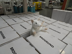 Eek - a Mouse (stevenbrandist) Tags: mouse rat animal stuffed toy ikea nottingham giltbrook boxes white brogrund