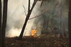 Burning the Woodland Floor, Munroe Island, Kerala, India (Steve Weaver) Tags: kerala india munro island backwaters paradise beauty nature fire burn burning wood woodland forest trees man men heat