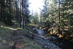 Exploring trails (davebloggs007) Tags: alberta hiking canada