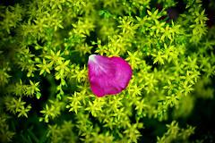 petal (slowhand7530) Tags: nikon d800e carlzeiss makroplanart250zf makroplanar macroplanar makroplanart250 petal
