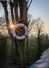 Baumring (karo.perez73) Tags: landschaft ring rettung stern
