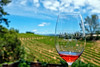 A Taste at Mounts (lennycarl08) Tags: mountswinery sonomacounty drycreekvalley winecountry northerncalifornia wine rosé