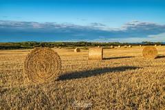 Cleadon Hills Bales (robinta) Tags: pentax ks1 sigma sigma1770 england cleadon farming crops agriculture ngc nationalgeographic uk light shadow landscape pentaxart bales