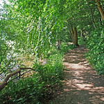 Sunlig forest trail by a lake thumbnail