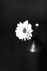 ...That's why you so fervently love Me in my weakness and in my sin... (c) Anna Akhmatova (Cookie ...) Tags: flower budvase lowkey blackandwhite blackbackground intentionalblur poetic poetry