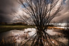 reflection tree (bjdewagenaar) Tags: photography photograph photographer photooftheday sony sonyalpha sonyphotographer sonyimages sonya77ii sonya landscape landscapephotography waterscape water sky clouds tree reflection nature wideangle sigma raw lightroom