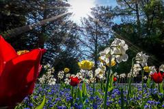 Flower paradise (Carandoom) Tags: botanic garden flower light sun white red tree sunstar rx10m4 rx10 m4 sony paradise